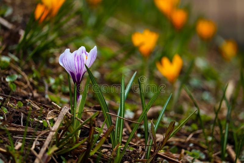 Vivid flower closeup in the Moscow garden royalty free stock photography