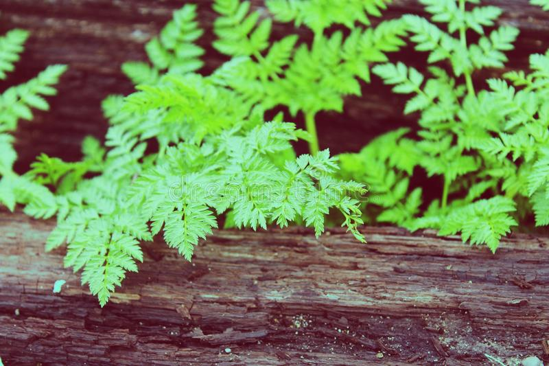 Vivid green leaves royalty free stock images