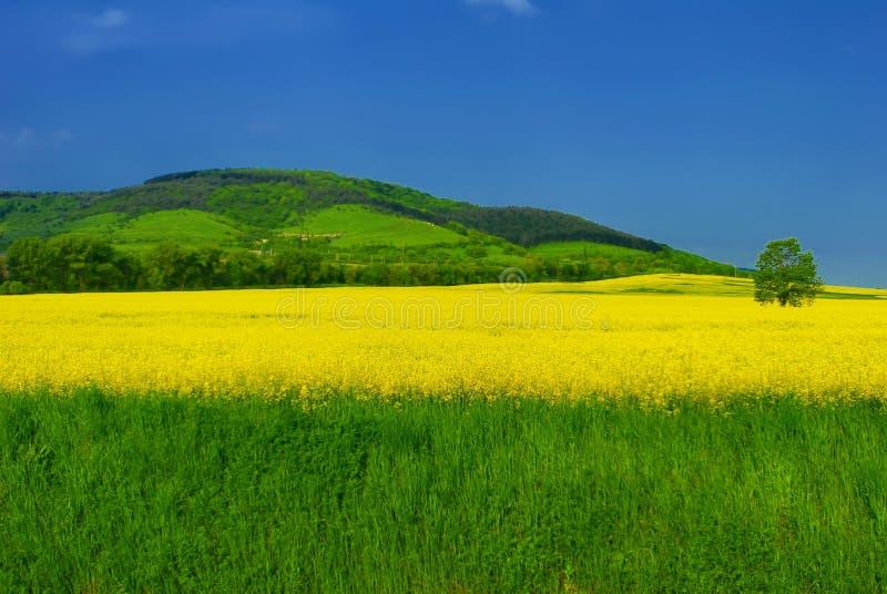 Vivid summer landscape stock photos