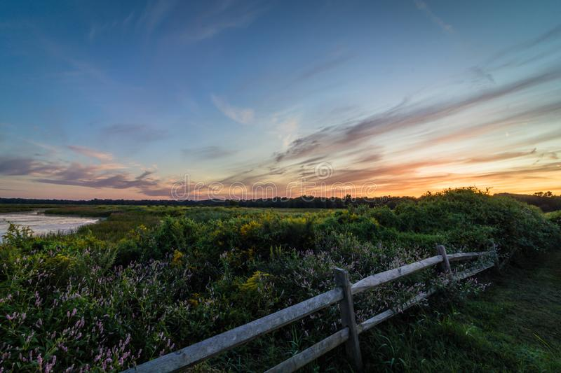 Vivid sunset over wild flowers and foliage in late summer stock photo
