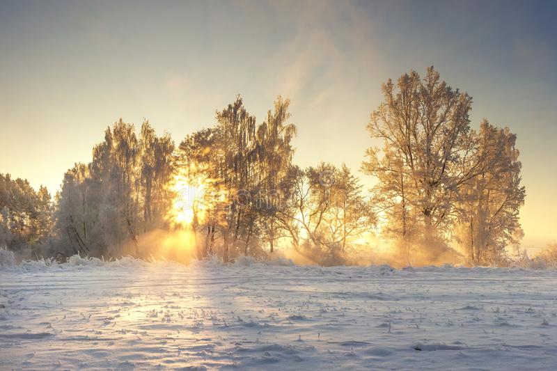 Vivid winter landscape. Frosty nature with golden sunlight. Sunrays shining in morning frosty trees. Snowy wild nature stock photography