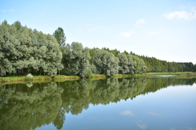 Vividly reflected the forest shore of the lake, a blue sky, over the water of the river bowed the branches of exotic trees stock photo