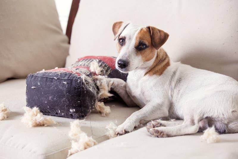 Viziando cane a casa immagine stock