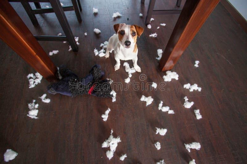 Viziare i cani fotografia stock libera da diritti