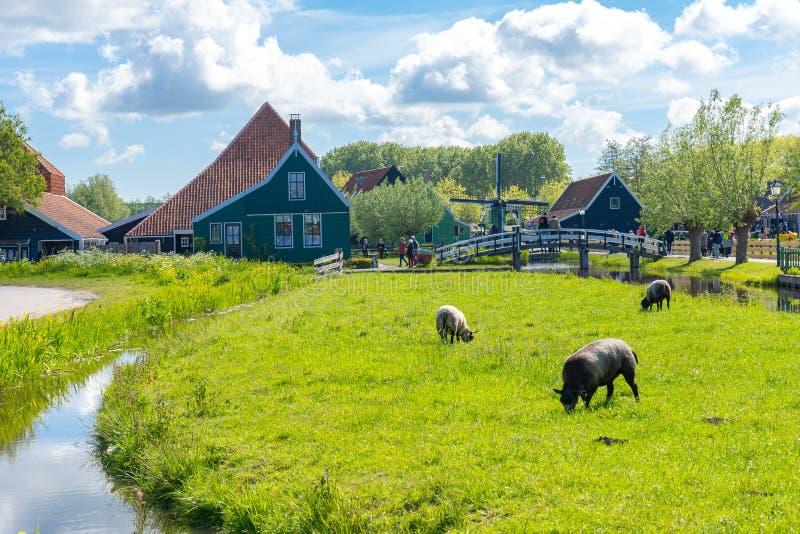 Vizinhança de Zaanse Schans com Zaandam, Países Baixos imagem de stock