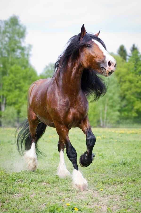 Vladimir szkicu konia bieg galopują na łące w lato czasie zdjęcie royalty free