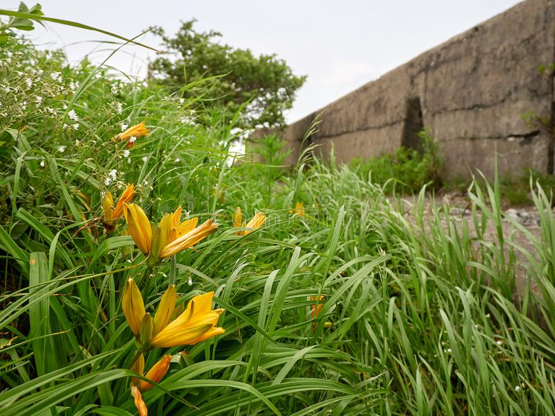 Fort of Vladivostok fortress. Vladivostok fortress Fort overgrown with greenery stock photography