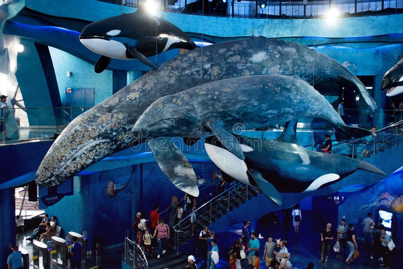 VLADIVOSTOK, RUSSIA - AUGUST 18, 2018: Whales, sculptures under the ceiling. The design of the hall of Vladivostok Oceanarium. VLADIVOSTOK, RUSSIA - AUGUST 18 stock image