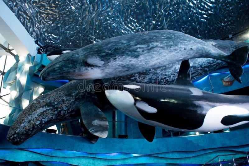 VLADIVOSTOK, RUSSIE - 18 AOÛT 2018 : Baleines, sculptures sous le plafond La conception du hall de Vladivostok Oceanarium image stock