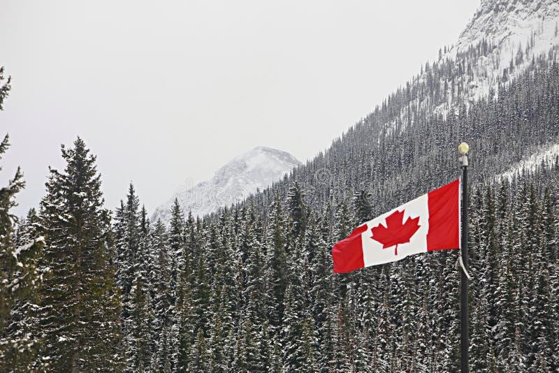 Vlag die van Canada over bergbos vliegt stock foto