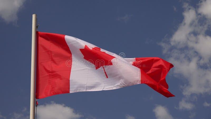 Vlag van Canada 4K stock video