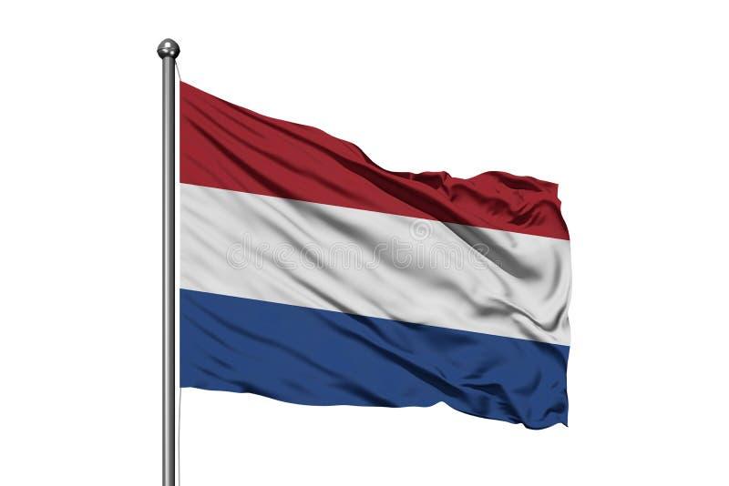 Vlag van Nederland die in de wind, ge?soleerde witte achtergrond golven Nederlandse Vlag royalty-vrije stock foto