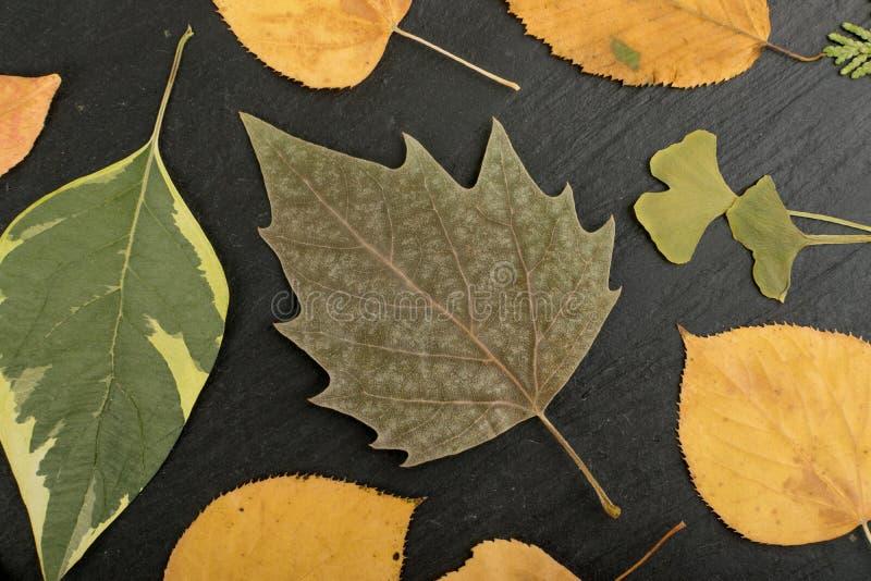 Vlak Droog Bladeren of Forest Floor in Camouflagekleuren royalty-vrije stock foto