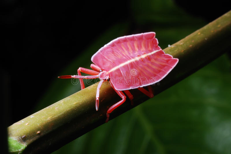 Vlak Gebouwd Insect royalty-vrije stock afbeelding