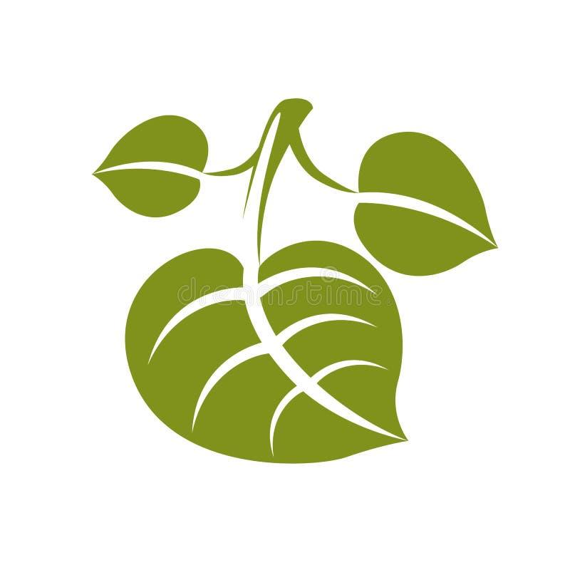 Vlak groen vergankelijk vectorboomblad, gestileerd aardelement royalty-vrije illustratie