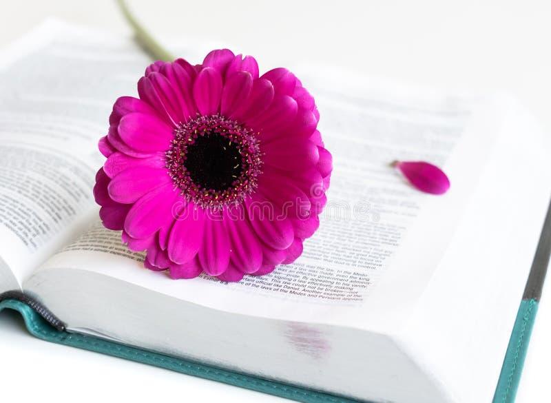 Vlak leg: open Bijbel, boek, open dagboek en roze, purper, violette, rode Gerbera-bloem met bloemblaadjes stock foto