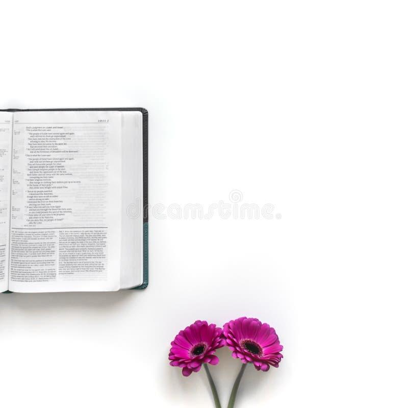Vlak leg: open Bijbel, boek en roze, purper, violette, rode Gerbera-bloem met bloemblaadjes stock foto