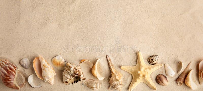 Vlak leg samenstelling met mooie zeester overzeese shells op zand, ruimte voor tekst royalty-vrije stock foto