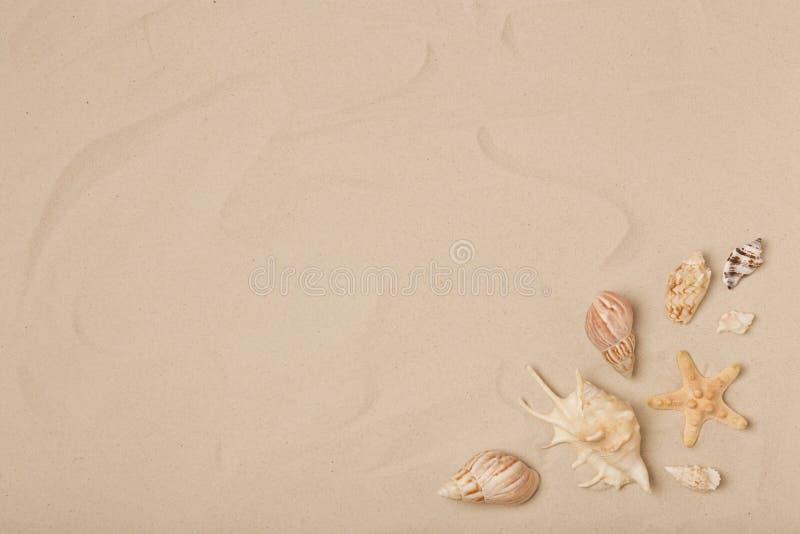 Vlak leg samenstelling met overzeese shells, zeester en strandzand royalty-vrije stock afbeelding