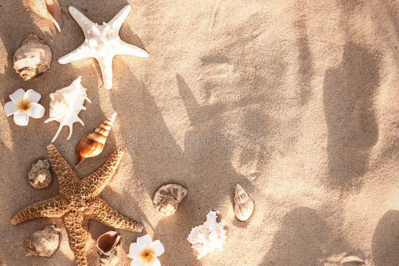 Vlak leg samenstelling met zeesterren en zeeschelpen op zandig strand stock afbeelding