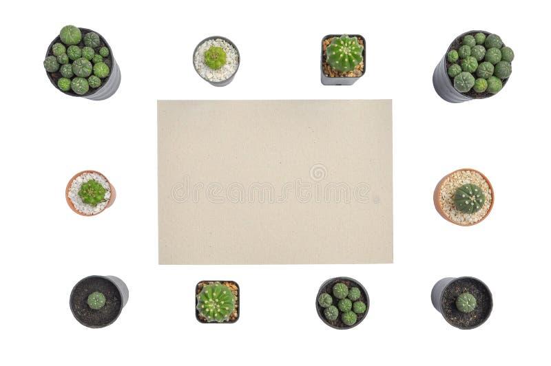 Vlak leg van cactusinstallaties in de pot met document stock afbeeldingen