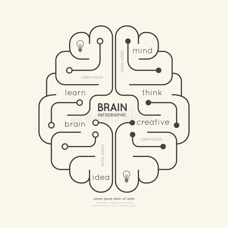 Vlak lineair Infographic-Onderwijsoverzicht Brain Concept Vector royalty-vrije illustratie