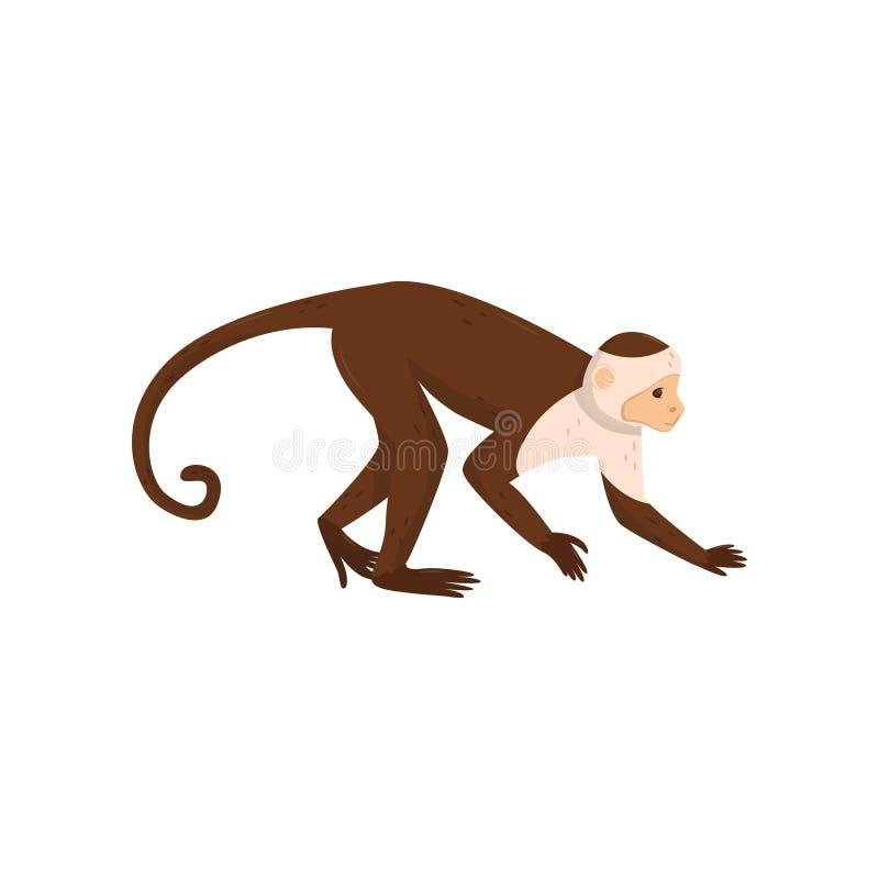 Vlak vectorpictogram van bruine capuchin, zijaanzicht Kleine aap met lange staart Wild dier van het regenwoudwild of vector illustratie