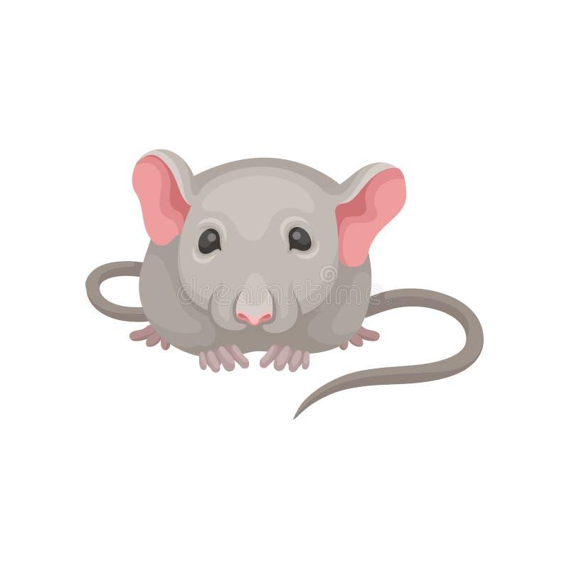 Vlak vectorpictogram van weinig muis, vooraanzicht Grijze muizen met grote roze oren, kleine glanzende ogen en lange staart binne vector illustratie
