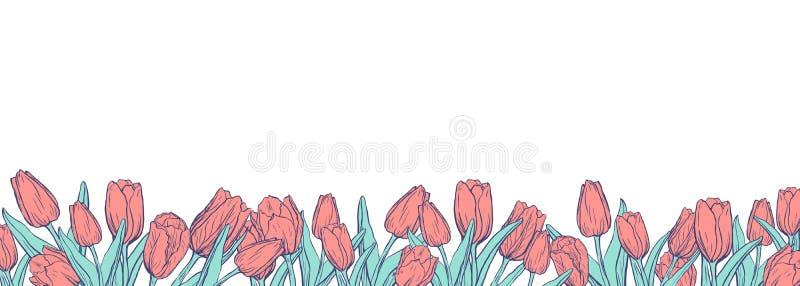 Vlakke horizontale banner met gekleurde tulpen op witte achtergrond royalty-vrije illustratie