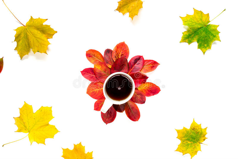 Vlakke samenstellingskop thee met de rode en gele die bladeren van de de herfstesdoorn op witte achtergrond worden geïsoleerd royalty-vrije stock afbeeldingen