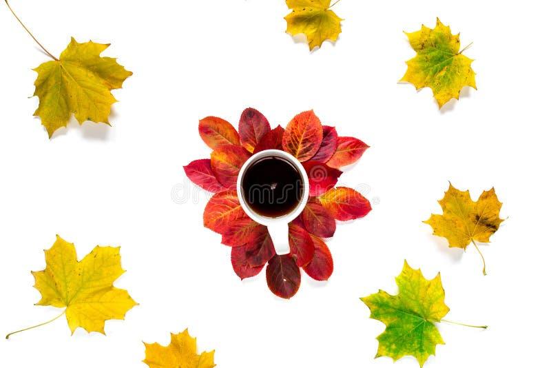 Vlakke samenstellingskop thee met de rode en gele die bladeren van de de herfstesdoorn op witte achtergrond worden geïsoleerd royalty-vrije stock foto's