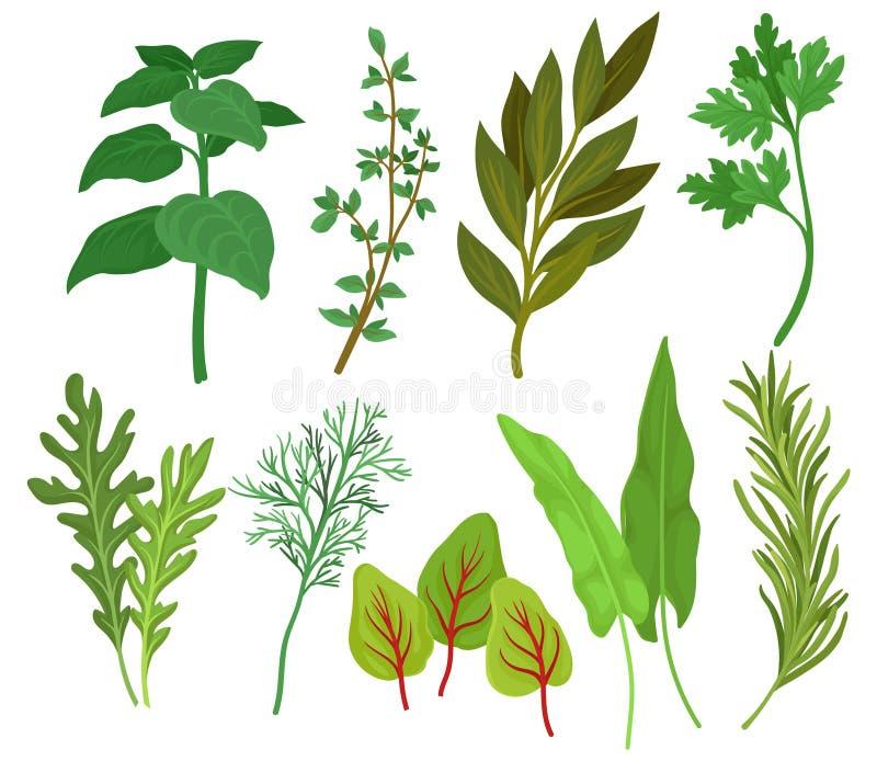 Vlakke vectorreeks verschillende kruiden Aromatische planten in culinair en geneeskunde worden gebruikt die Ingrediënten voor sma vector illustratie