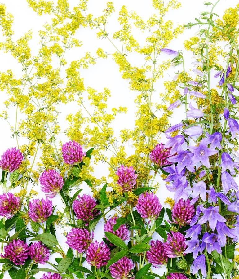 Vlakte van gebieds legt de wilde bloemen geïsoleerde om witte achtergrond, weidekruiden royalty-vrije stock fotografie