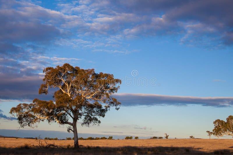 Vlaktes dichtbij Canberra, het HoofdGrondgebied van Australië royalty-vrije stock afbeeldingen