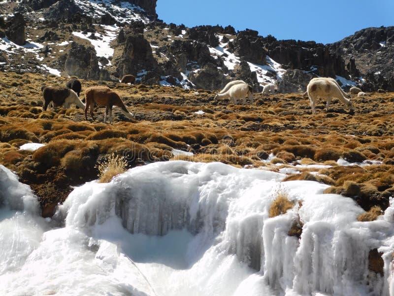 Vlammen in de Peruviaanse Andes onder het ijs royalty-vrije stock afbeelding