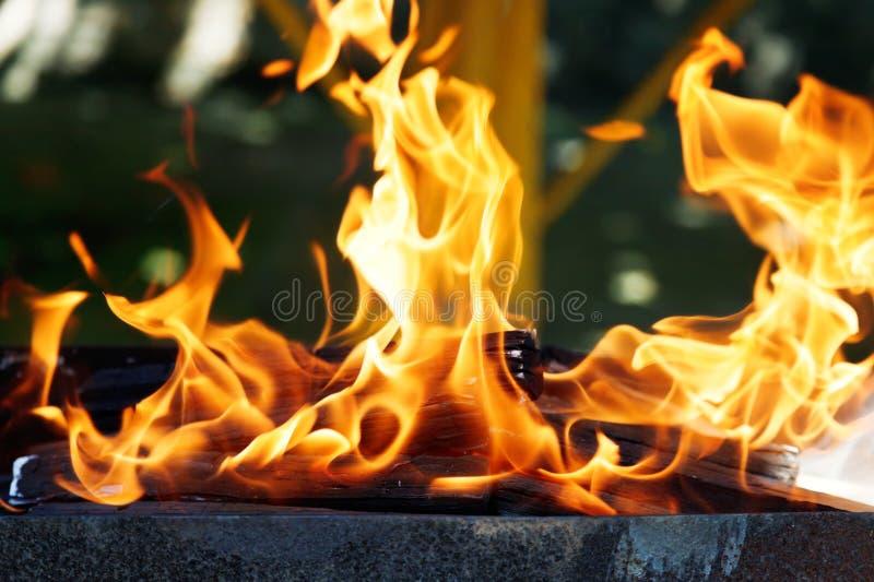 Vlammen van brandhout in koperslager royalty-vrije stock foto