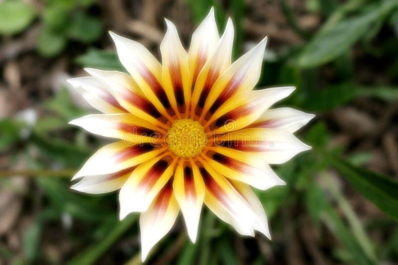 Vlammende bloemblaadjes stock foto
