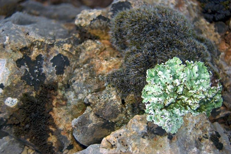 Vlechten en mossen stock afbeelding