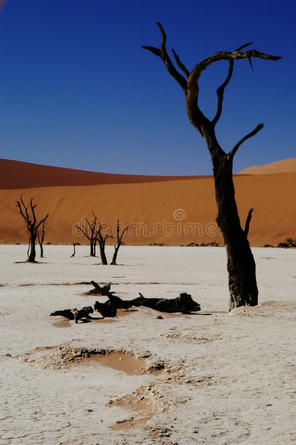 vlei dooie Namibia fotografia royalty free