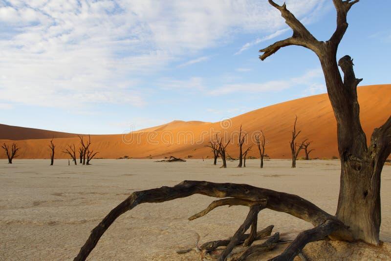 Vlei inoperante, Sossusvlei, Namíbia fotografia de stock
