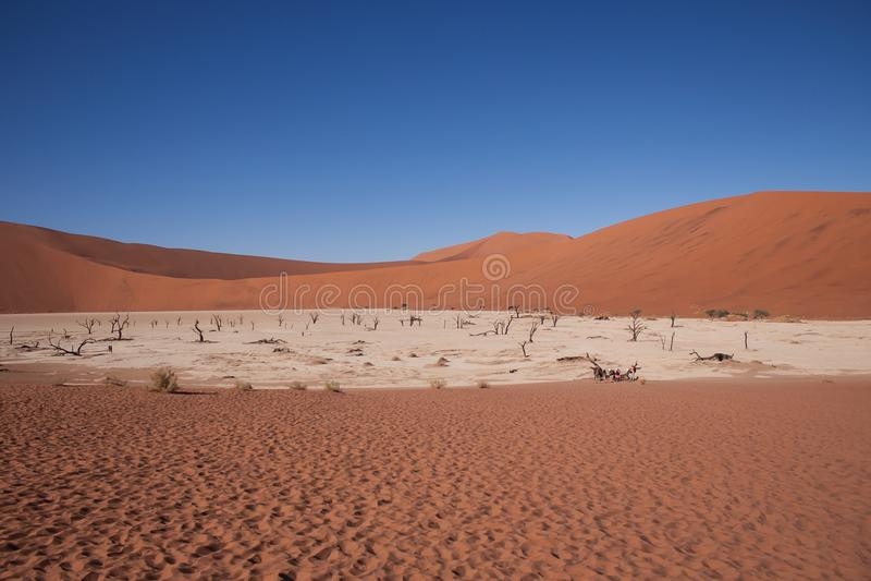 Vlei mort, la vallée morte dans le sossusvlei, Namibie image stock