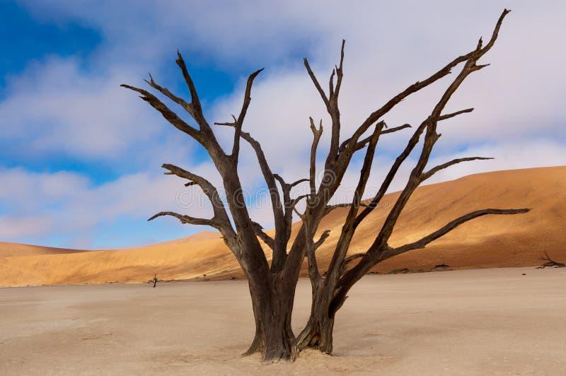 Vlei mort, Namibie photographie stock libre de droits