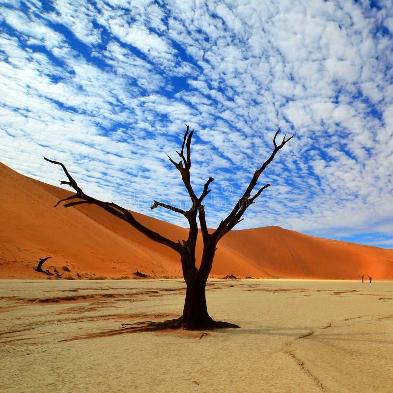 Vlei muerto en Namibia imágenes de archivo libres de regalías