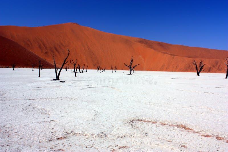 Vlei muerto, Namibia imagen de archivo libre de regalías