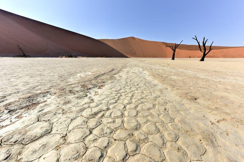 Vlei muerto, Namibia fotografía de archivo libre de regalías