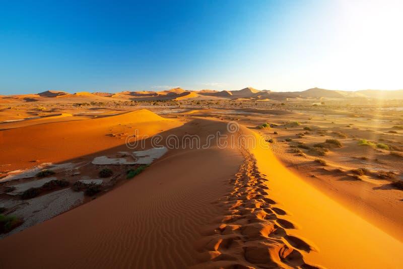 Vlei ocultado paisaje hermoso en Namibia África foto de archivo libre de regalías