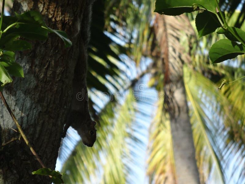 Vlek de eekhoorn stock fotografie
