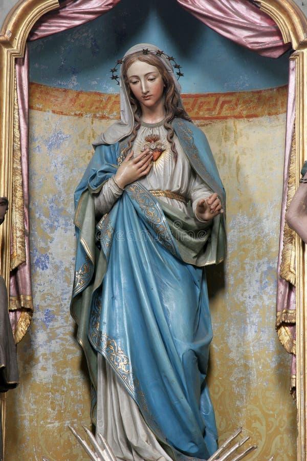 Vlekkeloos Hart van Mary royalty-vrije stock afbeelding