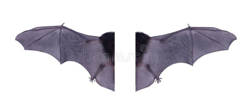 Vleugel zwarte die Knuppel op witte achtergrond wordt geïsoleerd stock afbeelding