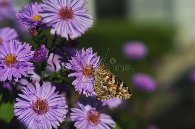 vleugels royalty-vrije stock afbeeldingen
